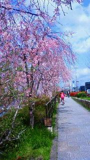 春ですねぇ。